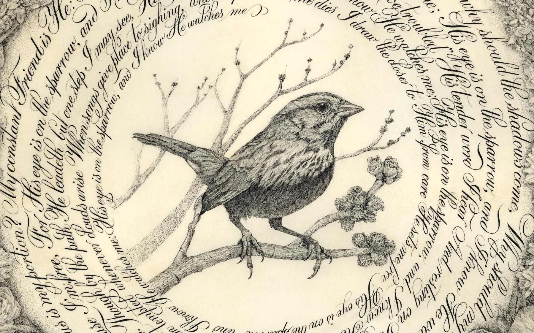 An ink pen drawing of a sparrow